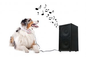 Hund hrt Lied aus Box