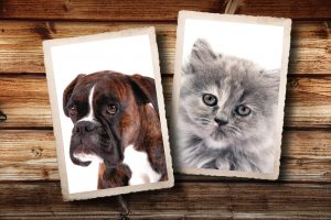 fotografie vintage di cane e gatto