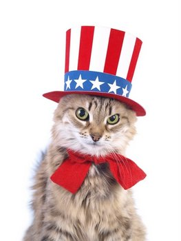 8 Ways To Keep Your Pets Safe This 4th Of July Kings